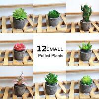 Bonsai Office Decoration Fake Cactus Artificial Plants Floral Craft Succulents