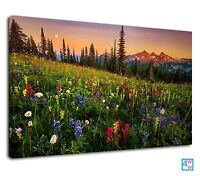 Spring Meadow Full Of Colourful Wild Flowers  Canvas Print Wall Art Picture