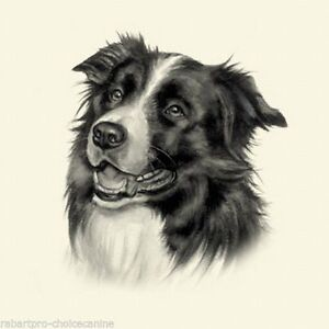 Dog Show Ring Number Clip Pin Breed - Border Collie