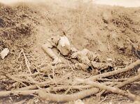 Photo française - Débris humains - Soldat allemand broyé par les obus 1914 1918