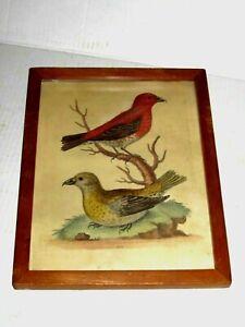 Antique Framed George Edwards Bird Print Original Hand Colored Etching 1757