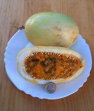 Maracuya - Passiflora - Fruta Gigante muy Dulce  100 semillas frescas