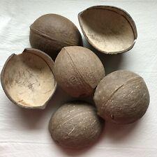 6 Coconut Shell Halves for Crafts, Bird Toy, Aquarium or Reptile Decor