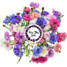 Kornblumen Mischung  EISKÖNIGIN 100 Blumensamen Garten Blumen Essbare Blüten