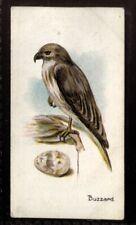 Tobacco Card, Lambert Butler, BIRDS EGGS, 1906, Buzzard, #38