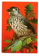 Spotted Nutcracker - Netherlands Bird Postcard