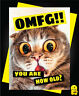 Funny Birthday Card Animals Banter Cheeky Humour Cat Kitten you are how old C328