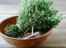 Seeds Thyme Garden Common Herbs Medicinal Plant Perrenial Organic Ukraine