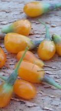 Yellow Goji, AMBER SWEET, seeds,zaden,samen,semi,sementes,semillas,graines