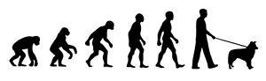 Border Collie Walker 'Evolution' car sticker, vinyl decal