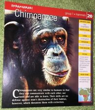 Endangered Animals Card - Mammal - Chimpanzee #20