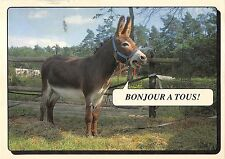 B98593 donkey anne france   animals animaux