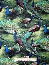 Peacock Bird Fabric - Wildlife Birds CP59990 Pageant Of Color Wild Wings - Yard