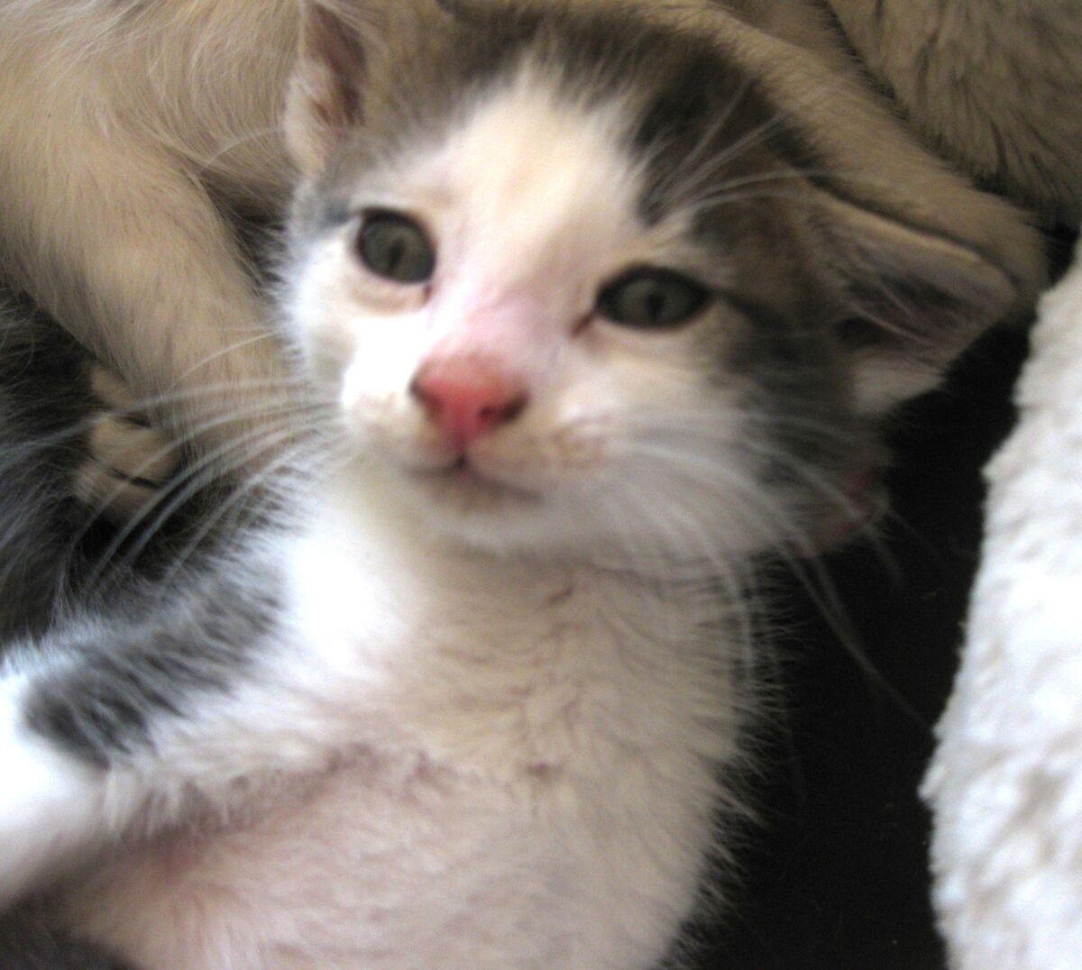 Bee Holistic Cat Rescue#1
