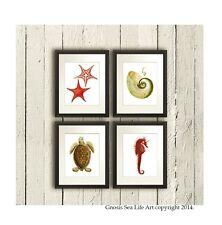 Beach Decor Set of 4 Wall Art Starfish Sea Turtle Seahorse Nautilus Seashell