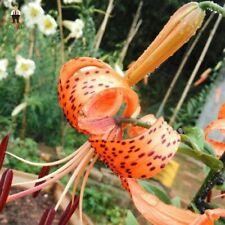20pcs. Rare Lilium Flower Balcony Bonsai seeds #85