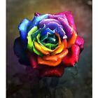 DIY 5D Diamond Painting Multicolored Roses Picture Full Drill Craft Home Decor