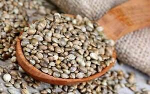 Hemp Seeds Birds Food -  natural Hemp Seeds 250 grams Vegan Seeds