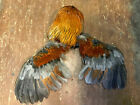 Taxidermy, { One } Beautiful Dried ROOSTER Hackles-Head-Neck feathers,and Wings