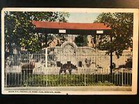Vintage Postcard>1919>Bear Pit>Franklin Park Zoo>Boston>Massachusetts