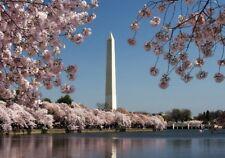 Wentworth Cherry Blossoms & Washington Monument 40 Piece Mini Wood Puzzle D.C.