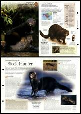 American Mink #283 Mammals - Discovering Wildlife Fact File Fold-Out Card