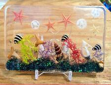 Novelty Home Decor Ocean Sea Shells Beach Art Ornament Paperweight Nautical ss65