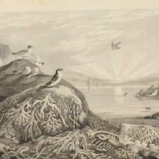 Antique (Pre - 1900) Natural History Engraving Art Prints