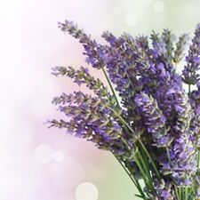 4 oz. Lavender Fragrance Oil for Candle and Soap Making
