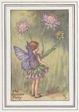 CICELY MARY BARKER c1930 THE SCABIOUS FAIRY Painting Vintage Art Book Print