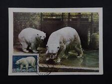 Russia MK 1957 Faune Ours Polaire Polar Bear Ours Blanc CARTE MAXIMUM CARD MC cm a7696