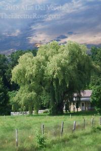 Willow -------   Landscape Giclée Print by Alan Del Vecchio