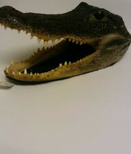 "7"" wild genuine alligator head and teeth taxidermy"