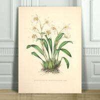 """JEAN LINDEN - Beautiful White Orchid #16 - CANVAS ART PRINT POSTER - 12x8"""""""