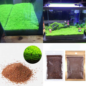 Aquarium Plant Seeds Fish Tank Decor Aquatic Water Grass Foreground Landscape