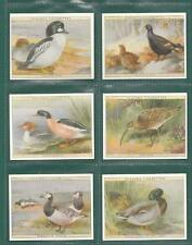 VICTORIA GALLERY - MINT  SET  OF  L 25 PLAYERS  ' GAME BIRDS & WILD FOWL ' CARDS
