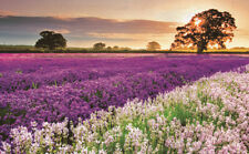 1000 Piece Adult Puzzle Sunrise Lavender Field View Jigsaw Educational Toys Gift