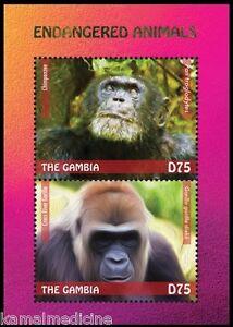 Gorilla, Chimpanze, Wild Animals, Gambia 2014 MNH SS