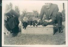Photograph 1930's  Cute Litter of Puppies in Basket  shot 2