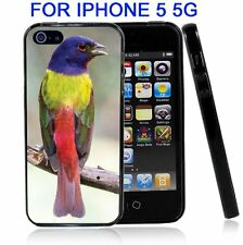 Painted Bunting For Iphone5 5G Case Cover