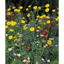 New Pack Kings Seed Wildflowers Range 'Cornfield Flowers Mix' Flower Seeds