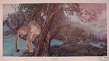 """Julie Kramer Cole COUGAR Print """"TOPANAS"""" Limited Edition # 2627 of 3850 Cougar"""