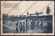 MONDINE 247 MONDARISO RISO RISAIA AGRICOLTURA viaggiata 1926 POESIA BERTACCHI