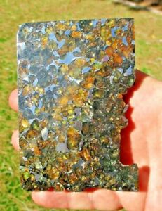 Meteorite: 303.7 gram seymchan pallasite end cut.