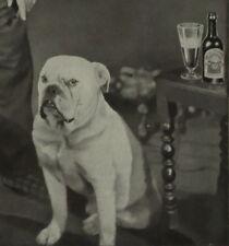 Worthington Kennel Club British Bulldog Beer 1930 Ad Advertisement 6191