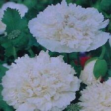 Poppy Seeds 500 Peony Cream FLOWER SEEDS