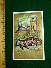 1881 A.B. Seeley Comic Cats Anthropomorphic Style Victorian Trade Card #1 F20