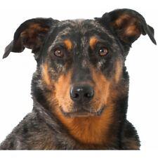 Hundeaufkleber - Beauceron - selbstklebender Foliensticker Berger de Beauce Schä