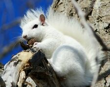 White Squirrel / Squirrels 8 x 10 / 8x10 GLOSSY Photo Picture Image #25