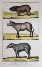 BABIRUSSA CAPIBARA TAPIRO TAPIR DEER PIG DIDEROT ANTONIO BARATTI 1770 CABIAI